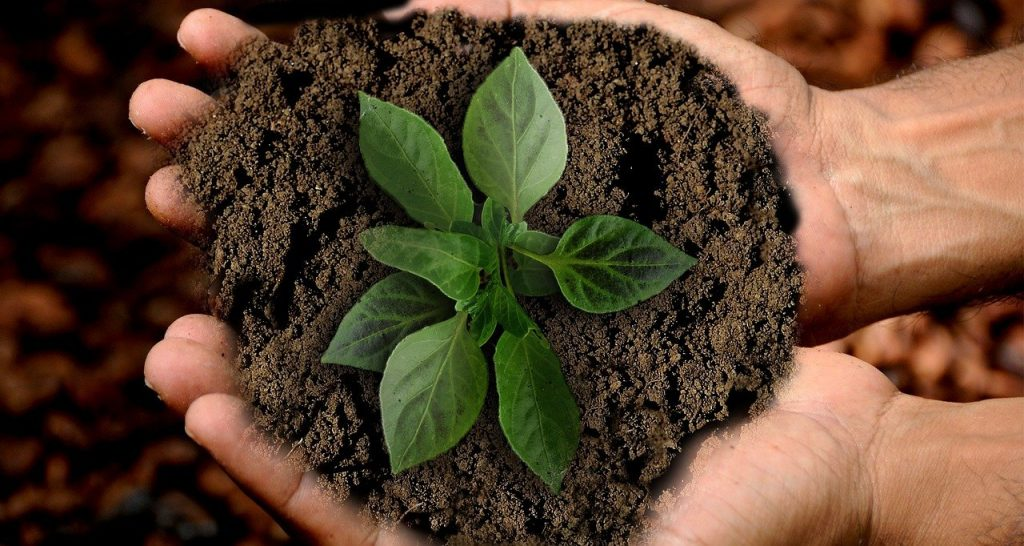 earth, scion, leaf
