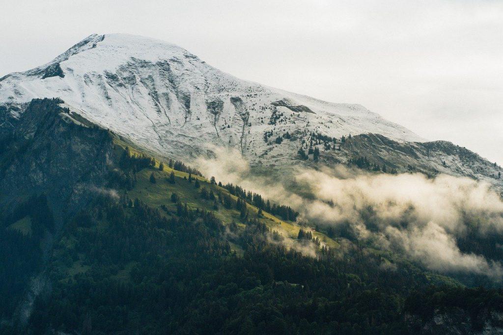 mountains, trees, fog